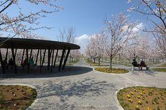 Parque Sakura Hiroba (2006)