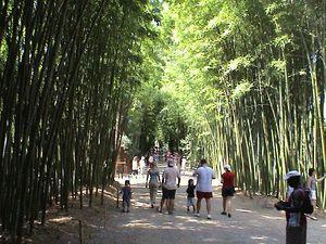 Paseo principal de la Bambuseria de Anduze