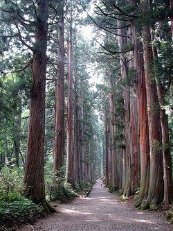 Tree lined path to the Togakushi shrine1.jpg