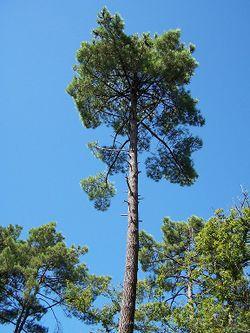 Forêt de la Coubre 024.jpg