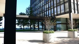 Mies.Lake Shore Drive .3.jpg