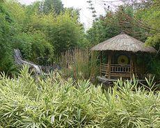 Vivienda de bambú [2]