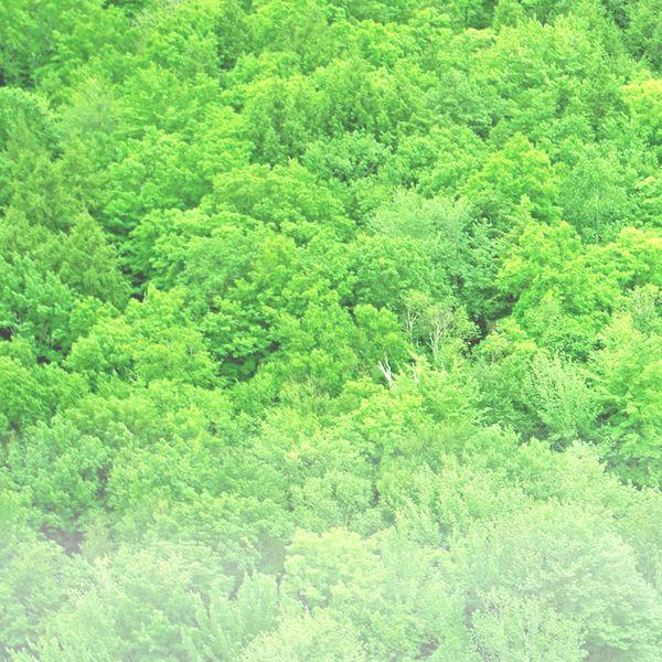 Archivo:Vegetacion.deg.jpg